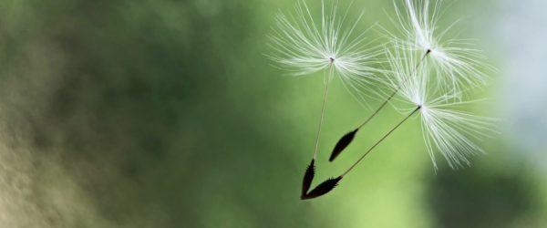 Leadership 2021: Zuversicht statt Hoffnung