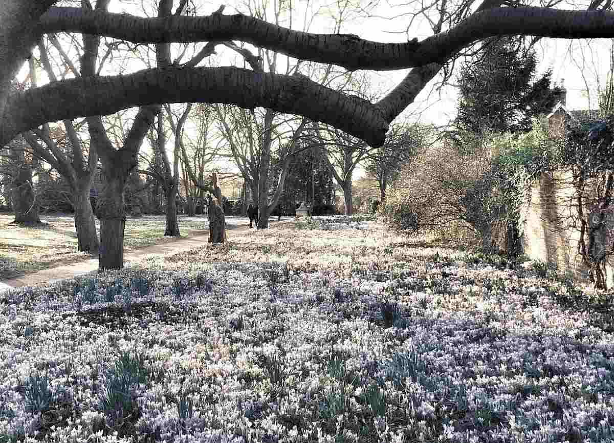 Foto Krokusse im Frühling